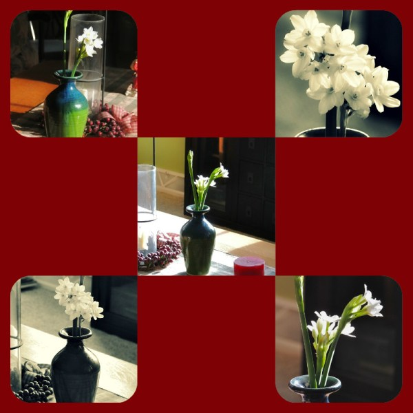 paperwhites vase collage