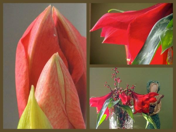 red amaryllis collage