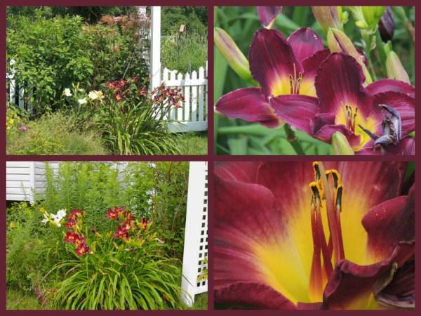 side garden gate summer