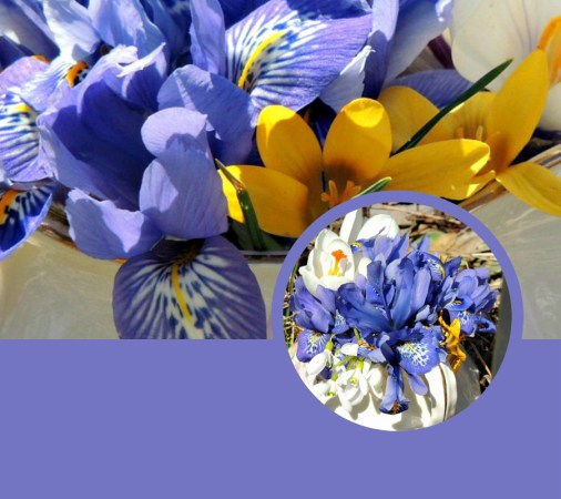 iris spring outdoor vase collage