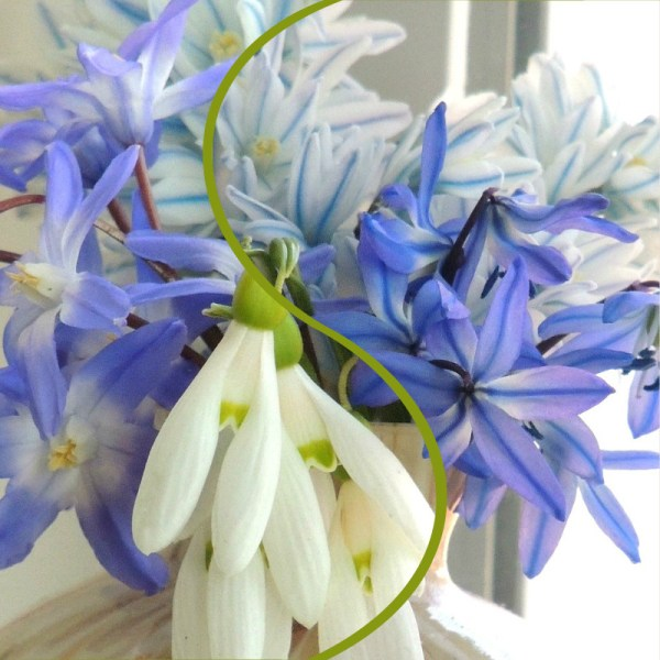 tiny bulbs vase collage