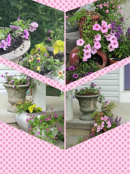 front pots collage