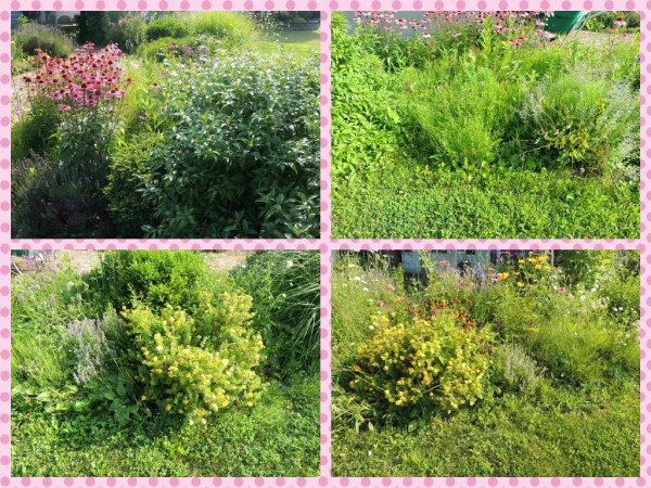 front grass side collage