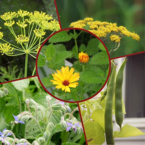 veg garden flowers