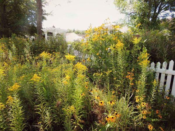 meadow behind the bog
