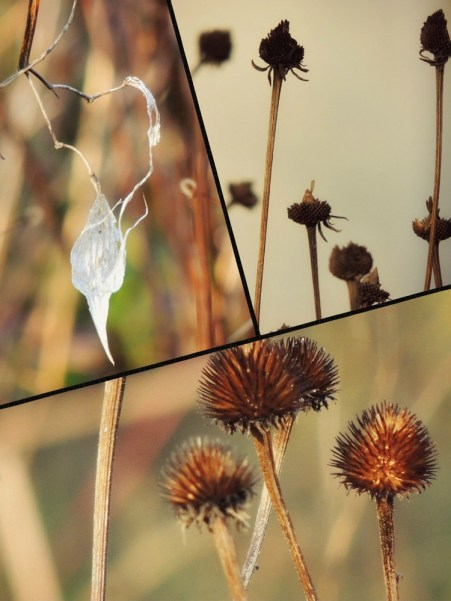 more dried flowers collage