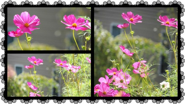 cosmos collage