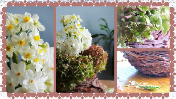 paperwhites and dried hydrangeas