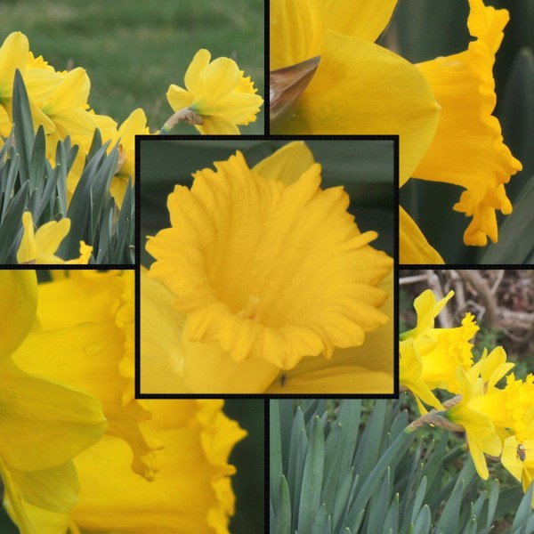daff collage (1)