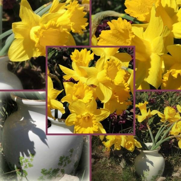 daff vase collage