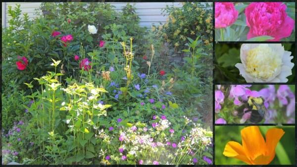 wall garden in early June