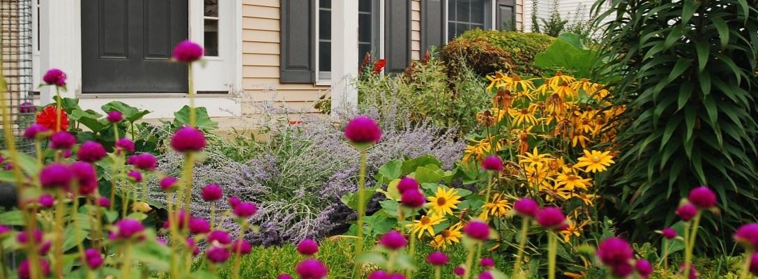 Zone 4 Annuals and Perennials in a Boarder Garden
