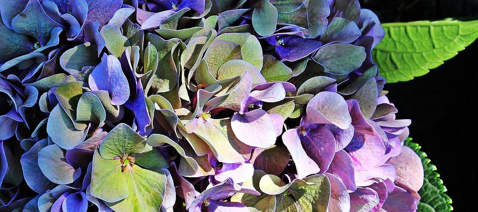 hydrangea multi colour arrangement