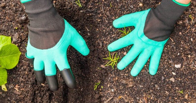 Gardening Gloves Are Worn As A Defence Against Dangers In The Garden