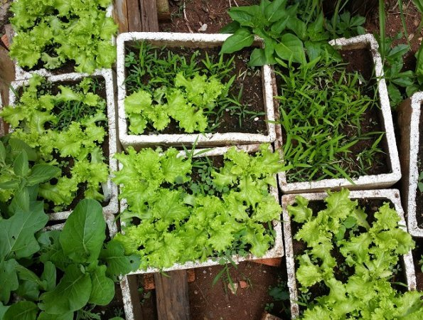 Organic Vegetable Gardening Products To Help Your Organic Garden