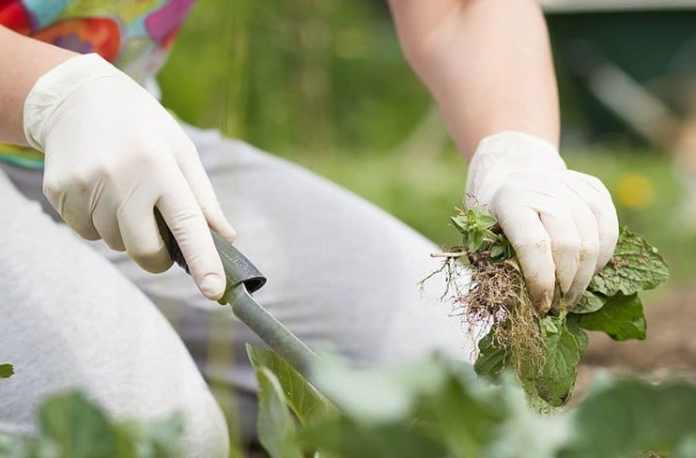 Weed Prevention Program Keeps Weeds Out