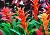 How to Grow Bromeliads?