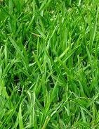 Grass Seed For A Green Lawn