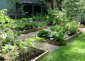 Growing Vegetables With Raised  Beds Garden