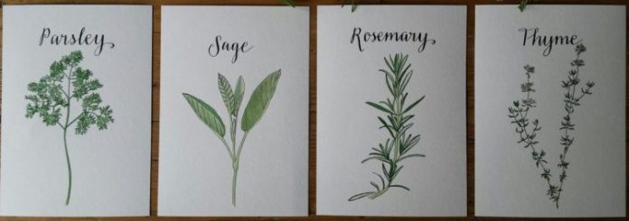 Parsley, Sage, Rosemary, and Thyme