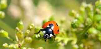 Organic Pest Control Methods For Your Organic Garden