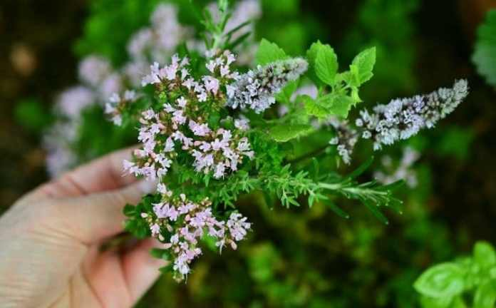 Aromatic Flowers and Plants in Garden