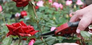 How to Prune Spring-Flowering Shrubs