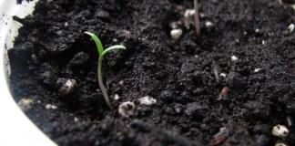 Spring Seed Sowing 101