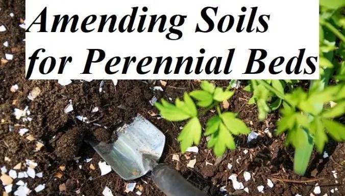 Amending Soils for Perennial Beds