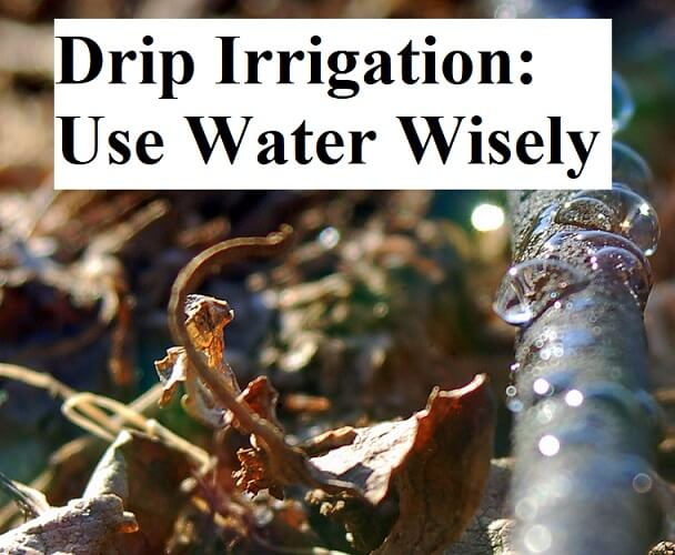 Drip Irrigation: Use Water Wisely