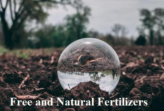 Free and Natural Fertilizers for your Garden