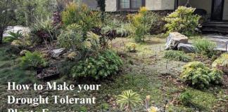 How to Make your Drought Tolerant Plants Even more Drought Tolerant