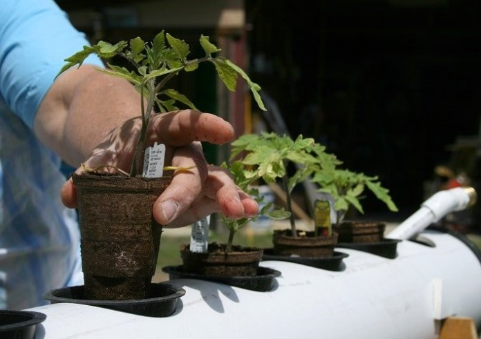 Is the Hydroponic Herb Garden for You?