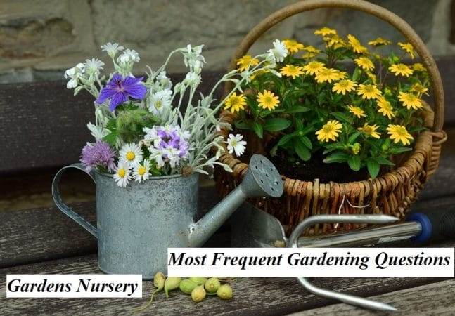 Most Frequent Gardening Questions