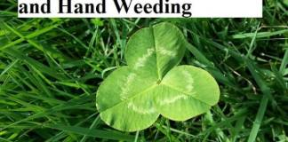 On the Virtues of Clover....and Hand Weeding