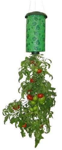 Topsy Turvy Upside Down Tomato