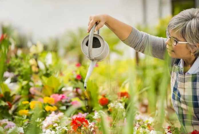 A Guide to Successful Flower Gardening