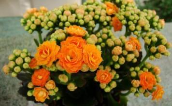 05 Best Indoor Blooms in your Home