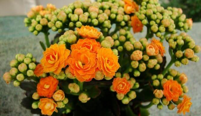 05 Best Indoor Blooms in your Home