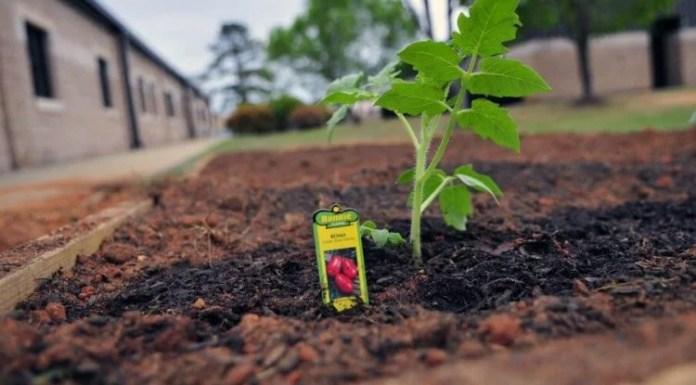 Best Ways to Planting Vegetables