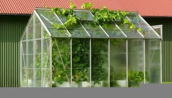 Build A Cheap Greenhouse To Grow Garden Produce | GARDENS