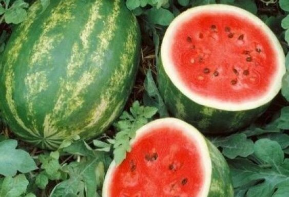 How to Grow Juicy Sweet Watermelons