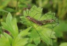 Mosquitoes - All Thing You Should Know