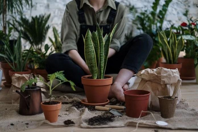 Organic Indoor Plants Care & Pest Control