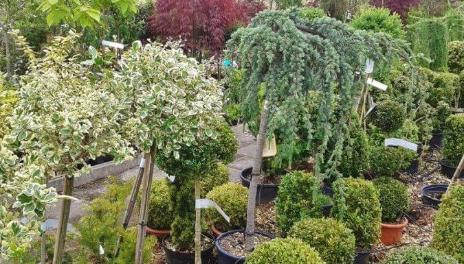 Regional Guide to Native Trees