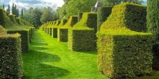 Best Summer Lawn Tips