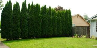 Why you will need to Plant Trees on Your Lawn?