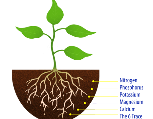 17 Essential Elements for Plant Growth
