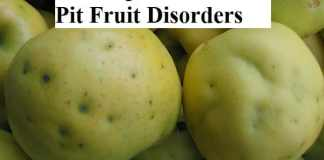 Cork Spot and Bitter Pit Fruit Disorders