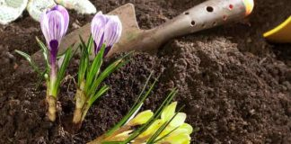Flower Garden Soil Mix
